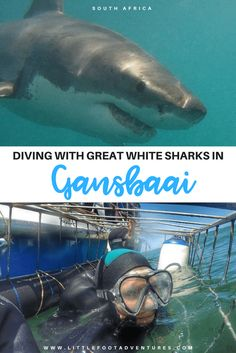 Sharks are with no doubt one of the scariest and deadliest animals in the world. Diving with Great White Sharks in Gansbaai made me demystify my fears. Great White Shark Diving, African Holidays, Deadly Animals, Beaches In The World, Travel Inspiration, Travel Ideas, Travel Tips, African Safari, Animals Of The World