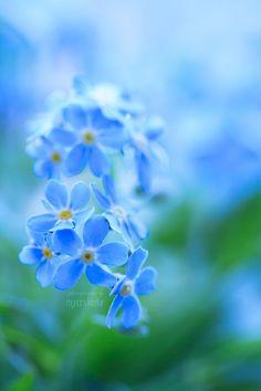 SPIRIT OF BLUE by =ArwenArts  bokeh photography flowers blue