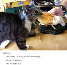 When the cat finally haz cheeseburger. - 23 Of The Cutest Things That Have Happened On Tumblr