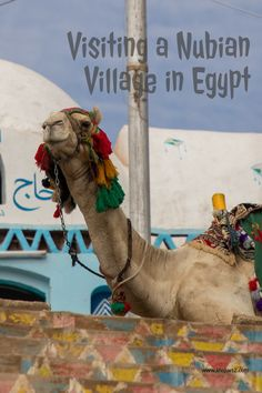 Visiting a Nubian Village in Egypt. Egypt is a great place to visit.   #egypt #nubianvillage