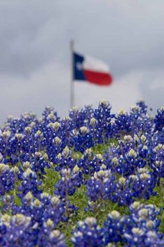 Bluebonnets and Texas flag in Independence, Texas, near a historical marker on the side of the road.