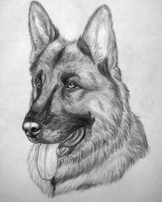 рисунок собаки карандашом: 39 тыс изображений найдено в Яндекс.Картинках
