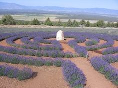 Mt. Shasta Lavender Farm's Labyrinth