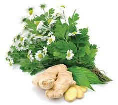feverfew / moederkruid During the growing season you can chew on a few leaves to relieve a headache, or steep 4 tablespoons of fresh feverfew (leaves, stem, and flower) per cup of boiling water for 10 minutes. Then strain and drink the tea. You can also dry the entire plant and use it to make tea. Steep 2 tablespoons of dried feverfew per cup of boiling water for 10 minutes. Strain and drink the tea. Feverfew helps relieve migraines as well as fevers, minor pain and inflammation.