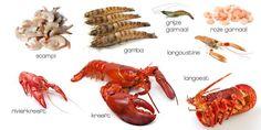 Wat is het verschil tussen scampi, langoustine, gamba, langoust en kreeft? - Tip | Forum en Tips | VTM Koken