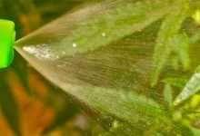Primula Vulgaris o Primavera - Growing Veggies, Bonsai, Plant Leaves, Pergola, Herbs, Exterior, Flowers, Plants, Food