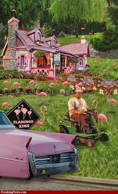 Pink Flamingo House and Garden Pictures
