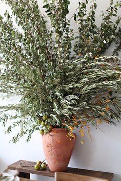 olive 'tree'