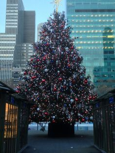 Christmas Tree in Bryant Park, NYC