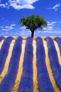 Provence, France...and the fields of lavender.✖️More Pins Like This At FOSTERGINGER @ Pinterest✖️