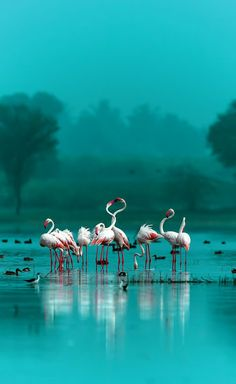 Turquoise - with flamingos.