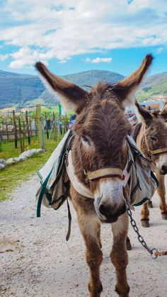 For a new way to see the Italy, you can bike, hang glide, or tour Norcia in Umbria by donkey. #italy #travel #food #drink #culinarytravel #italianfood #umbria #pork #cheese