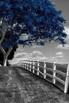 Super Black And White Nature Photography Trees Color Splash 60 Ideas Splash Photography, Tree Photography, Color Photography, Black And White Photography, Artistic Photography, Black And White Tree, Black And White Painting, Black And White Colour, Blue Pictures