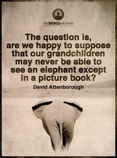 """Attenborough - """"The question is, are we happy to suppose that our grandchildren may never be able to see an elephant except in a picture book? Save Planet Earth, Save Our Earth, Our Planet, Save Mother Earth, Stop Animal Cruelty, Animal Rights, Climate Change, Slogan, Quotations"""