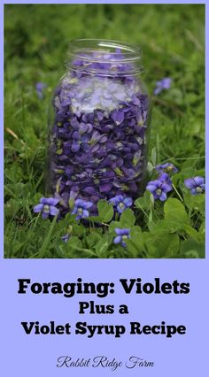 Rabbit Ridge Farm: Foraging: Violets Plus a Violet Syrup Recipe