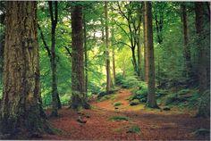 Scottish Forest lowlands