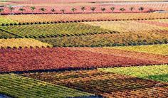 De Doorns / Hex Valley area in the Western Cape - Rob Tarr photography South Africa, Westerns, Harvest, Cape, Tapestry, Photography, Beautiful, Mantle, Hanging Tapestry