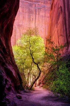 Slot canyon (Utah) by Charlotte Gibb