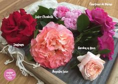 Rosen im Mai Flowers, Rose Varieties, Lawn And Garden, Royal Icing Flowers, Flower, Florals, Floral, Blossoms