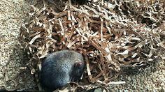 My Baby Rat ♡
