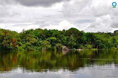 Águas de Pontal: Muitas vidas dependem de uma floresta.