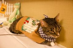 Photos From an Adorable, Literature-Inspired Cat Fashion Show at The Algonquin Hotel Aug 2013