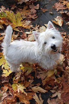 Joli petit chien