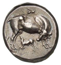 Statere - argento - Dirrachion, Illiria (Albania) (450-350 a.C.) - una mucca vs.dx. la testa girata a guardare il vitellino, in alto una vespa in volo - Münzkabinett Berlin