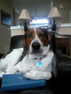 Dogs are my most favourite pet to have since I was a child.   Biscuit.  My daughter's dog.  Foxhound-Beagle Cross  Enjoying the book: A Dog's Purpose (also one of my favourite books)