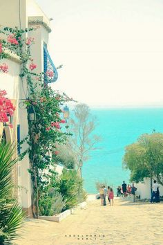 White n' Blue, once again, everywhere, on the valley of Sidi Bou Saïd village, northern Tunis city, shot by Abdelhamid Nabli, North-East #Tunisia