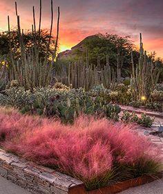 America's Most Beautiful Gardens: Desert Botanical Garden-Phoenix