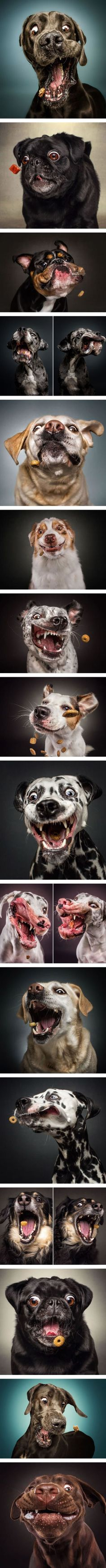 Expressions of Dogs Catching Treats In Mid-Air (By Christian Vieler-Kircher), art, photography #funnydogs