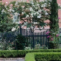 Small trees can pack a big punch into your landscape. Crape myrtle offers big clusters of frilly flowers in shades of pink, red, lavender, or white in summer and fall. Landscaping Around Trees, Privacy Landscaping, Outdoor Landscaping, Trees And Shrubs, Flowering Trees, Dwarf Trees, Dogwood Trees, White Flowers, Beautiful Flowers