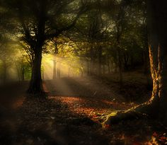 """coiour-my-world: """"Wonderland by Robert,s """" Beautiful World, Beautiful Places, Beautiful Pictures, Scenery Pictures, Nature Pictures, October Country, Forest Light, Black Forest, Image Nature"""