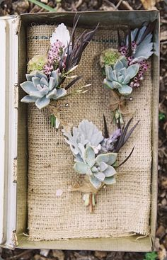 succulent and dusty miller corsage Braedon Flynn photo  the cutting garden design