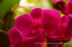 Botanic  moment