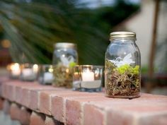 moss & lichen in Mason Jars = natures treasures