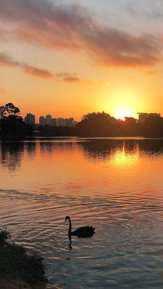 Fundo de tela feito durante um passeio pelo parque mais famoso de São Paulo.  Veja mais imagens no link, clique para ver!  #fotografiadeviagem