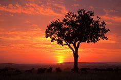 the sun sets on savannah animals in the masai mara region of africa