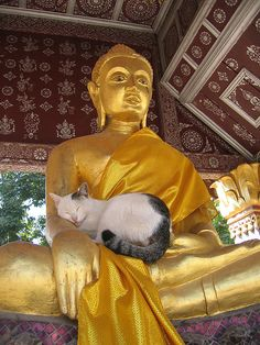 Cat achieving enlightenment, Luang Prabang, Laos by trent_talk2us (Flickr)