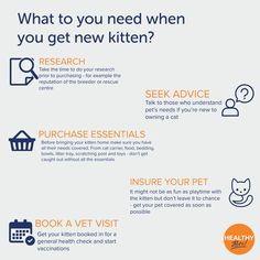 Want to get a kitten but not sure where to start? Healthy Pets offers 6 levels of cover for pets aged from 5 weeks old, click the link for more information on our policies #pets #kittens #cats #HealthyPetsInsurance #meowmonday Co Insurance, Insurance Quotes, Pet Plan, Getting A Kitten, Owning A Cat, Healthy Pets, Taken For Granted, Alternative Medicine, Quotations