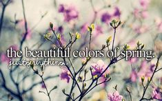 the beautiful colors of spring