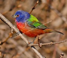 Home Page - Brenda's Nature Photograhy - Including Birds of Virginia