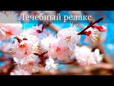Therapeutic soothing Chinese music for depression, nervousness … – Musical instruments Meditation Music, Mantra Meditation, Qigong, Relaxing Music, Beautiful Songs, Piano Music, Classic Movies, Hd 1080p, Instruments