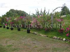 Lots for sale near SM CDO City located in Upper Carmen, Cagayan de Oro City composed of four titled adjacent lots with a total area of sq. Lots For Sale, Philippines, City, Plants, Cagayan De Oro, Cities, Plant, Planets