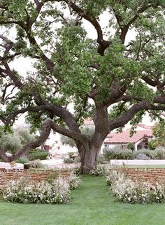 Outdoor wedding ceremony under a big tree with aisle line with flowers . Outdoor wedding ceremony under a big tree with aisle line with flowers . Outdoor wedding ceremony under a big . Outside Wedding Ceremonies, Wedding Lanterns, Outdoor Wedding Decorations, Wedding Ceremony Decorations, Outdoor Ceremony, Wedding Ideas, Wedding Blog, Wedding Stuff, Wedding Aisles