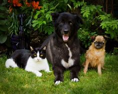 Marvin, Swizzle, and Squirt's family have been rescuing animals for over 25 years!  Marvin is a 13 year old cat, rescued at age 1 as a stray who hadn't eaten in days. Swizzle is an 11 year old Rhodesian Ridgeback Cross rescued from a drunk at 5 months of age. She had suffered terrible abuse. And Squirt is a 6 year old Brussels Griffon rescued from neglect at age 3, weighed only 4 lbs. Now, a happy, healthy 8 lbs.