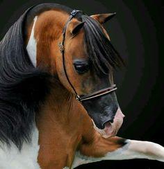Pretty Horsey