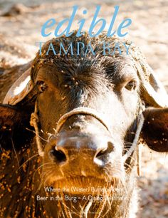 Edible Tampa Bay Winter 2014 -- Articles about a Hillsborough County farmer who makes buffalo milk cheese, the beer scene in St. Pete and the Pearl in the Grove restaurant near Dade City. Check it out!
