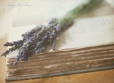 Pages of lavender....